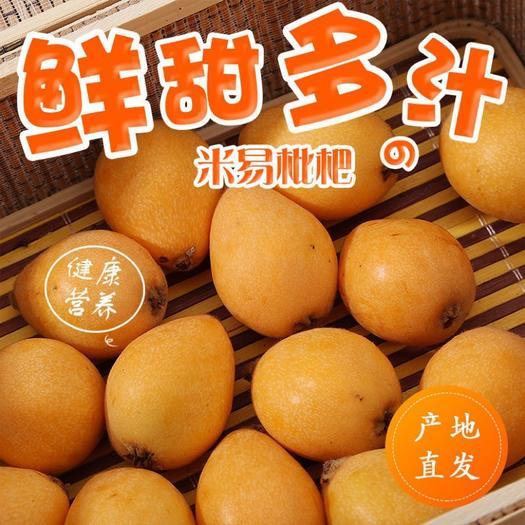 米易枇杷  四川攀枝花高原甜枇杷润肺新鲜枇杷琵琶果新鲜水果一件代发