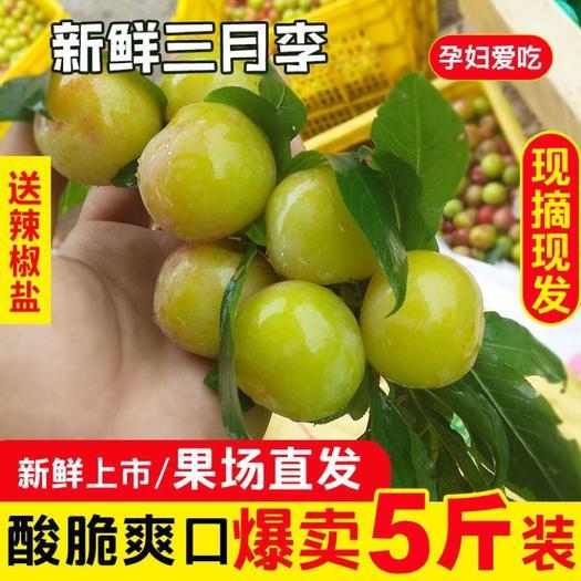 李子  云南正宗三月李青脆酸爽孕妇水果当季新鲜三月客一件代发整箱包邮