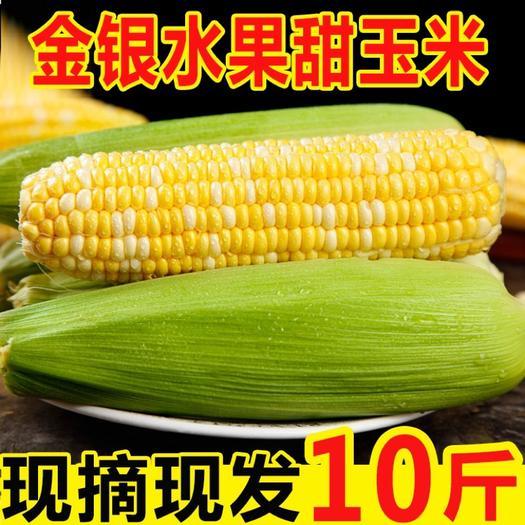 水果玉米  金银玉米现摘生吃即食/一件代发/整车/蔬菜当季嫩玉米新鲜玉米