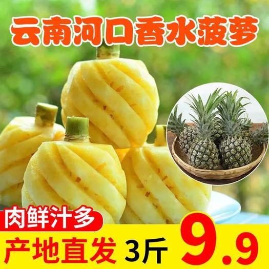 云南香水菠萝新鲜水果应季手撕凤梨小菠萝水果电商对接/一件代发