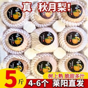 正宗山东莱阳秋月梨新鲜冰糖脆甜梨子雪梨10斤包邮