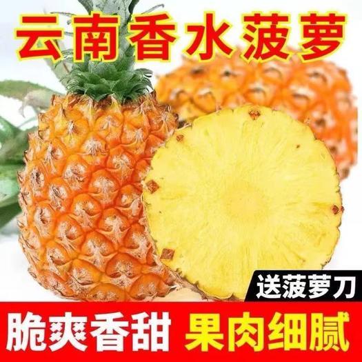 云南香水菠蘿新鮮水果應季手撕鳳梨小菠蘿水果電商對接/一件代發