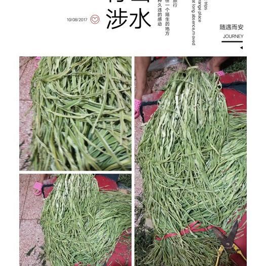 徐州邳州市贡菜