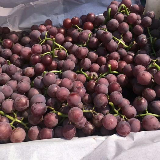 石家庄晋州市巨峰葡萄 1.5- 2斤 5%以下 1次果