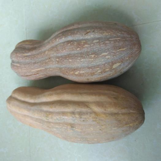华容县金丝南瓜 6~10斤 长条形