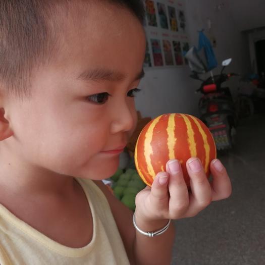 上饶鄱阳县香水瓜种子