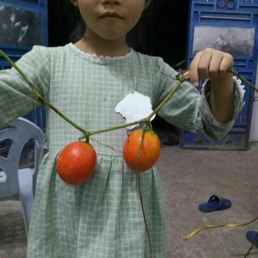 重庆市开州区鲜吊瓜