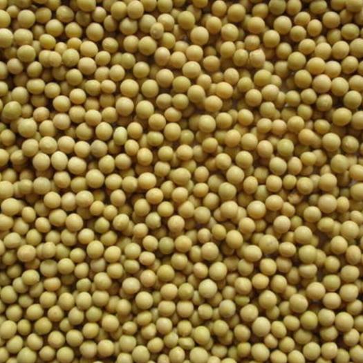 延边朝鲜敦化市芽豆690 生大豆 5等品