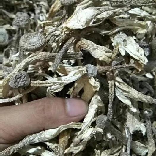 长沙雨花区鹿茸菇 大货批发批发价格