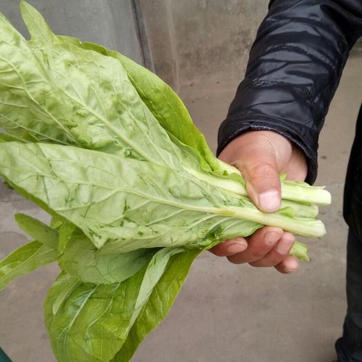 南縣白菜苔 15~20cm