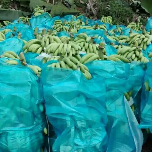 文山马关县河口香蕉
