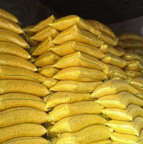望江县 安徽优质大豆