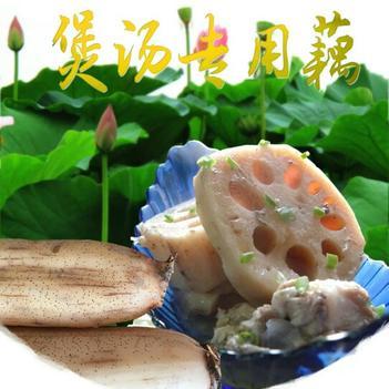 粉莲藕 3-5cm 10~15cm