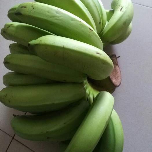 博罗县广东香蕉1号