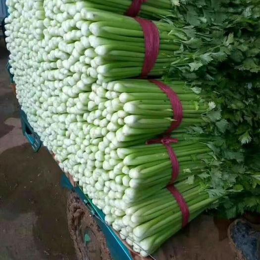邯郸永年区西芹 河北邯郸,蔬菜市场一年四季都有货,以诚信做生意,以质量为生存