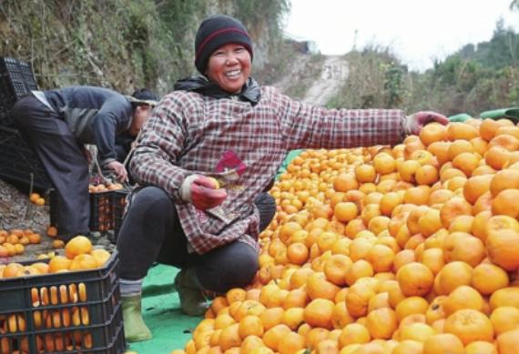 《中国经济导报》| 惠农网:电商服务乡村振兴 要讲情怀有担当