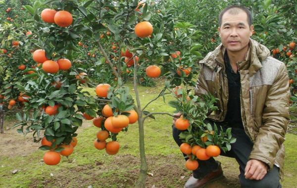 祁阳种植能手上惠农网卖果苗,年销售额轻松超400万