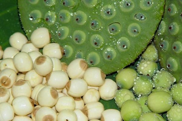 莲子的营养价值及吃法有哪些?