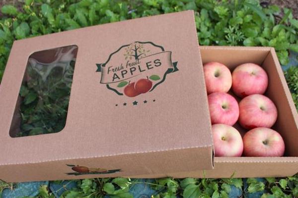 苹果的常见种类介绍