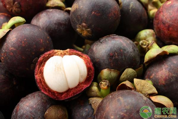 莽吉柿是哪种热带水果的别称,莽吉柿有哪些功效与作用?