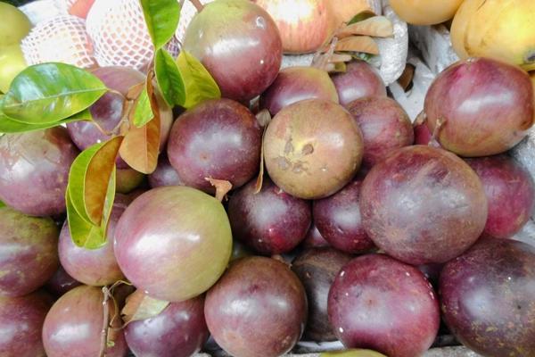 木奶果多少钱一斤?木奶果为何没形成规模化种植?