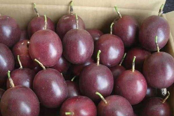 百香果的常见品种介绍