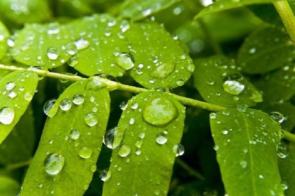 雨水时节我们需要注意什么?都有哪些关于雨水的诗句?