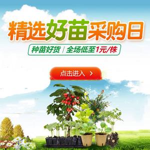 菊花种子怎么选种?育苗方法有哪些?