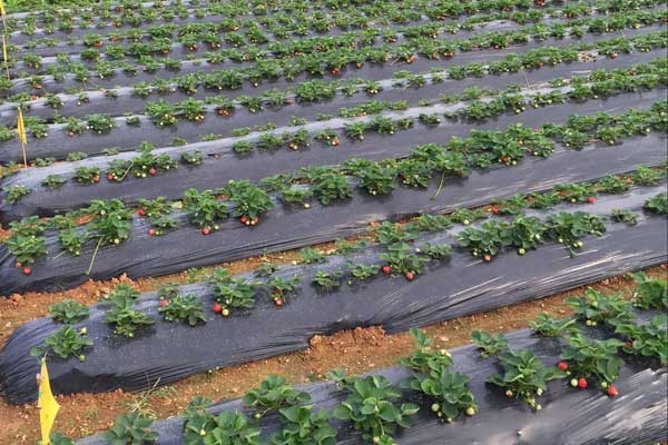农技推广主要有哪几大体系?补助有多少?