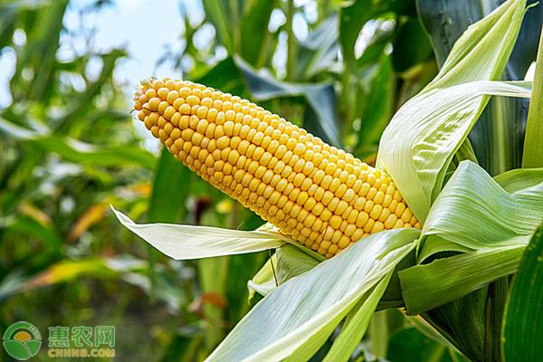 云南遭遇严重旱情,农业问题应该如何解决?