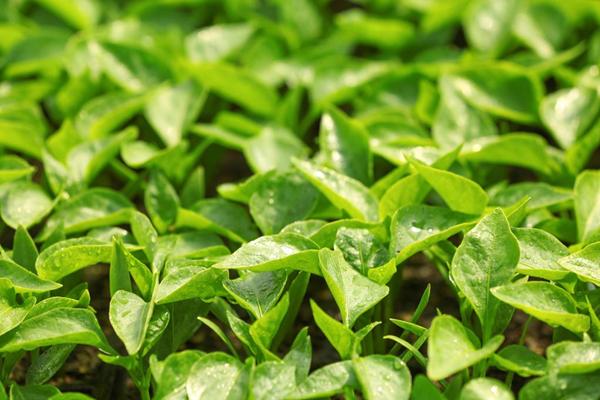 农业上常用的生长调节剂有哪些?