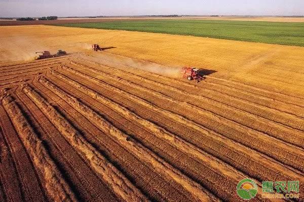 稳定粮食播种面积和产量,如何保障粮食安全问题?