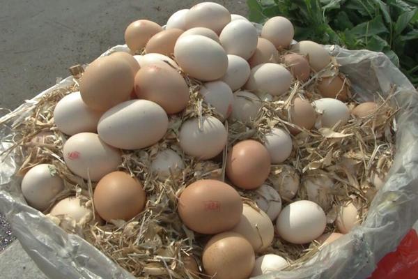 山东鸡蛋价格创年内新低,上周平均售价同比回落33.03%