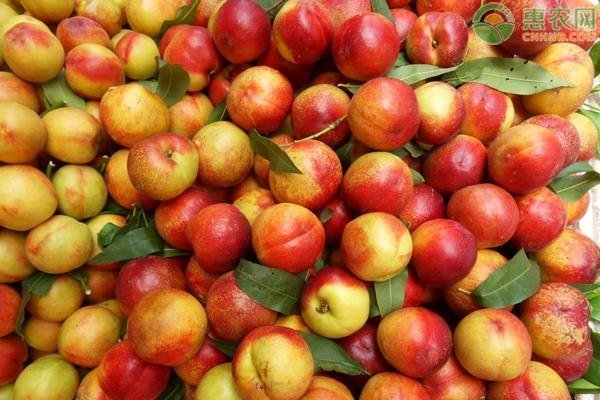 2020油桃多少钱一斤?今年油桃价格低原因分析