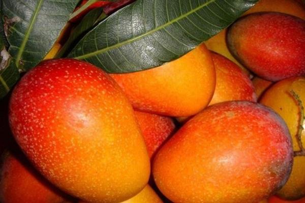 哪个品种芒果最好吃?
