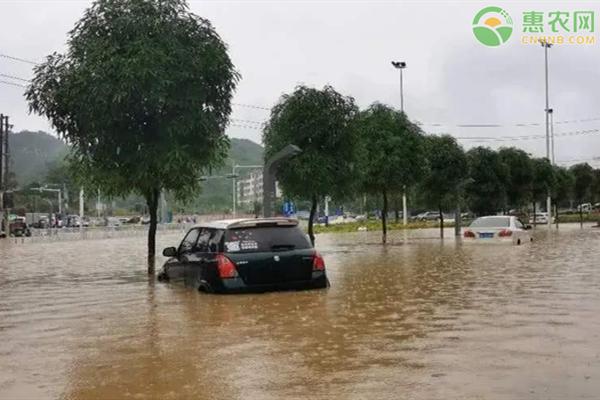 湖北强降雨已致超65万人受灾,农作物如何做好防治措施?