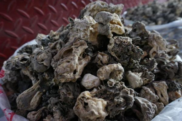 巴楚蘑菇多少钱一斤?市场价格为什么这么贵?