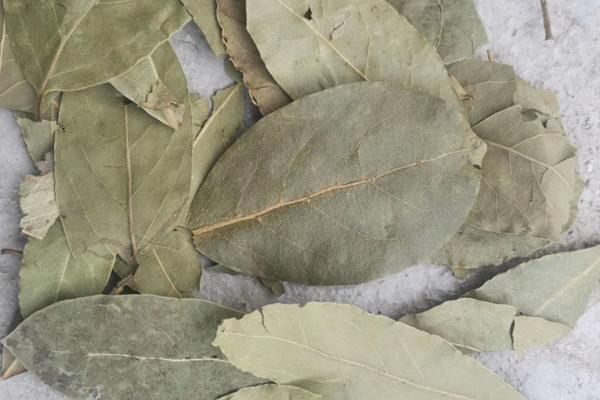 香叶是什么树的叶子?有什么功效作用?