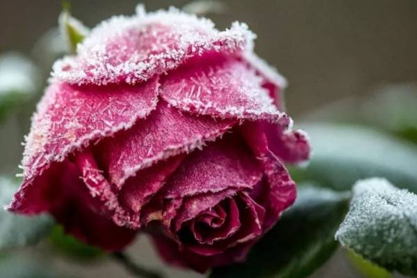 霜降节气吃什么食物养生?