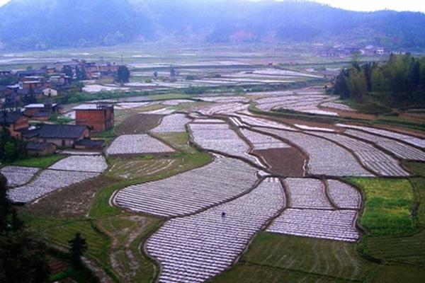 2020年农村水田征收补偿标准