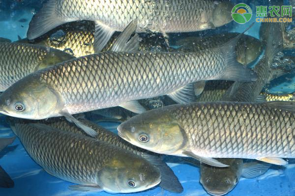 养鱼补贴有哪些?申请条件是什么?2021年养鱼补贴政策解读