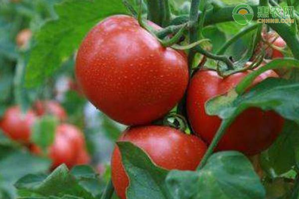 2021年4月全国范围内蔬菜价格行情及预测