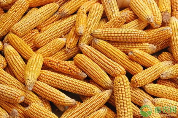 2021年4月份至5月份玉米价格预测
