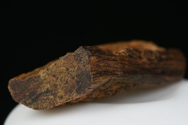 沉香木产地在哪里?优质的沉香有哪些?