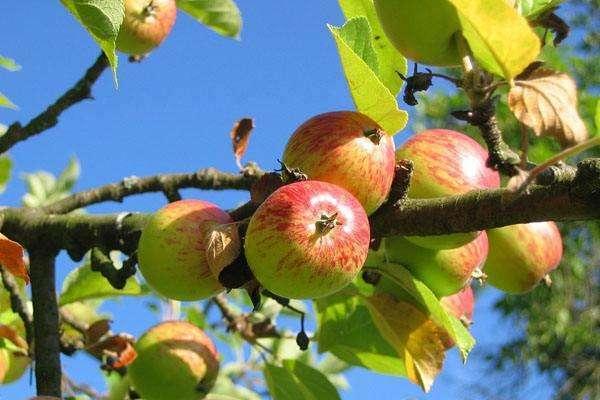刚给果树施完肥就下雨了,还需要再重新施一遍肥吗?