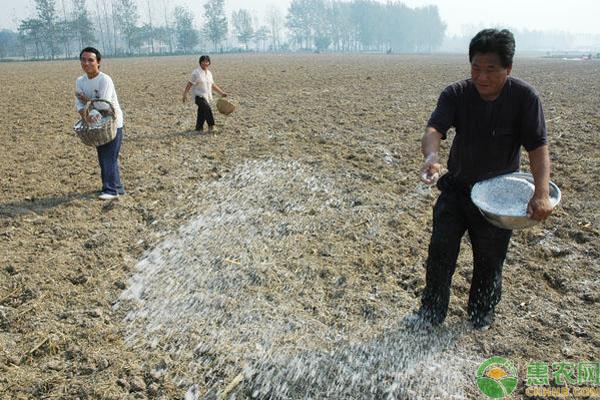 水溶肥使用事项