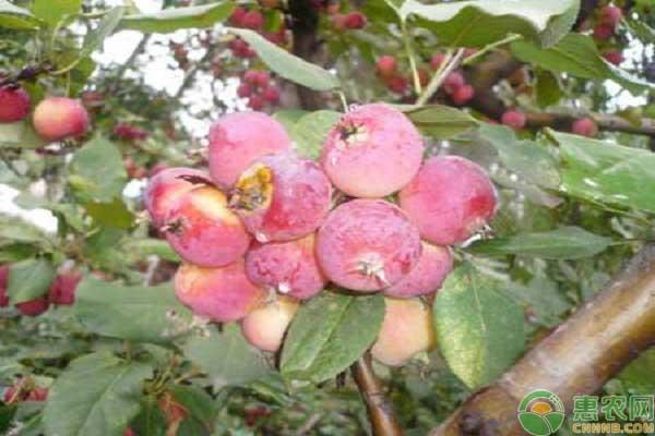 果树叶面肥