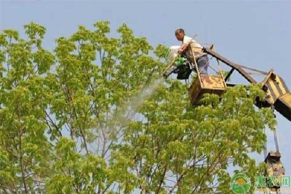 果树喷施叶面肥的注意问题