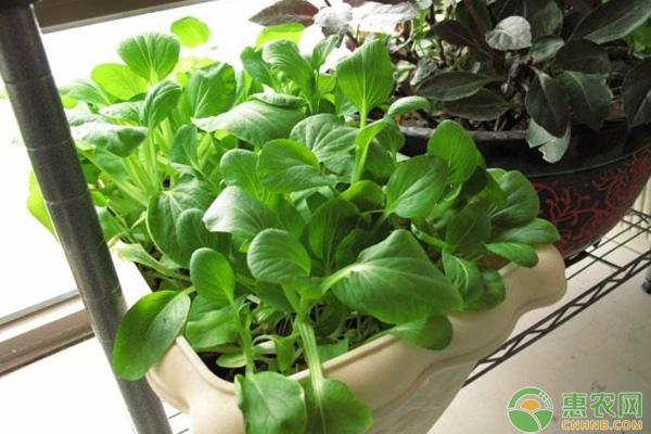国庆前后可以种植什么蔬菜?推荐几种比较适合的给您!