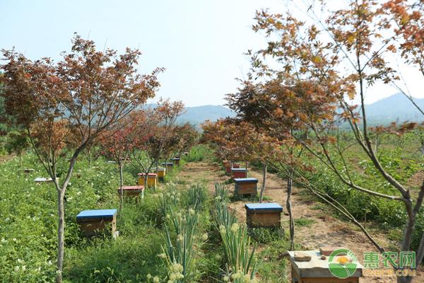蜜蜂如何养殖?这四大技巧蜂农必看!
